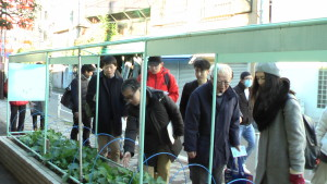 (江戸野菜のプランター見学)